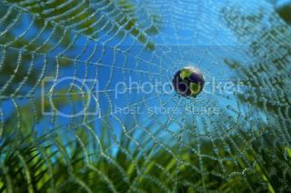World in a Web